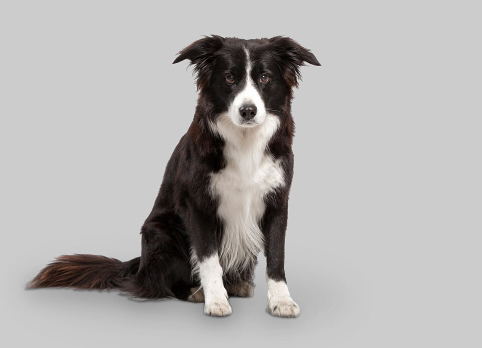 1st Assistent Dog